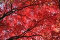 京都新聞写真コンテスト 紅葉真っ盛り