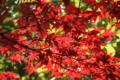 京都新聞写真コンテスト 秋の色
