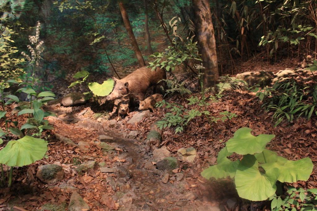 森の中にいるイノシシ