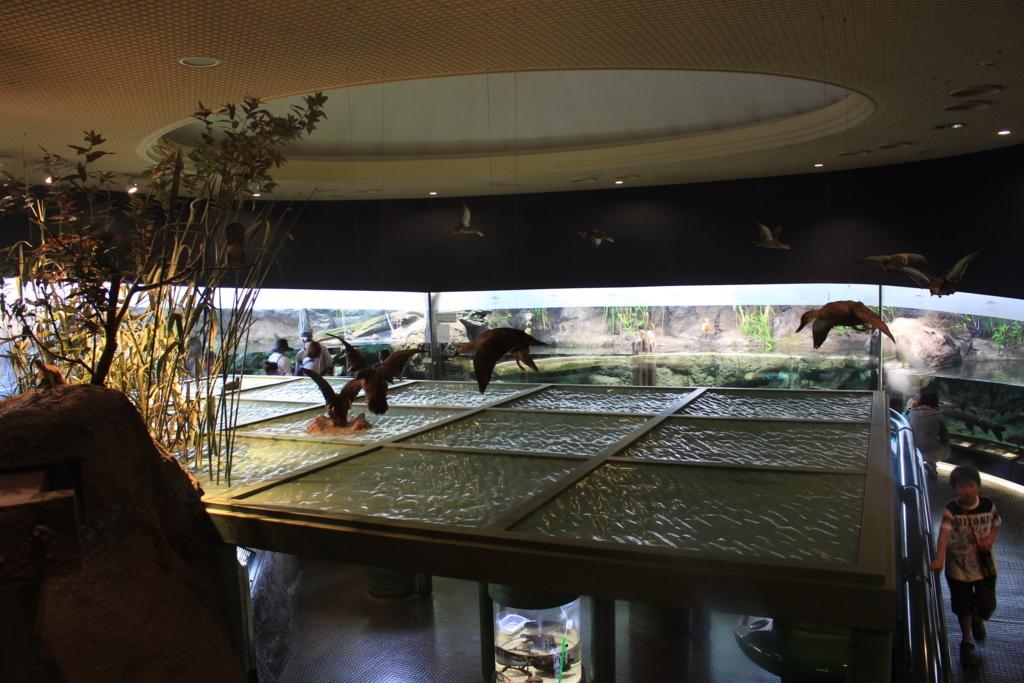 水族館のスペース