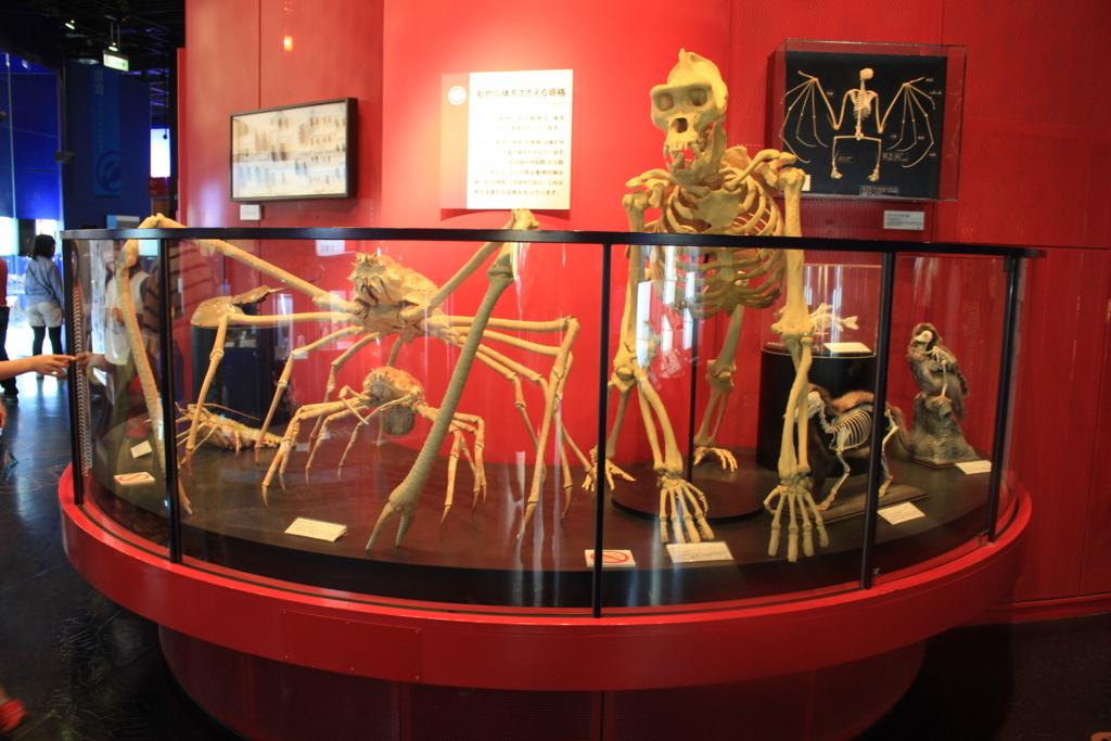 いろんな生き物の骨格標本