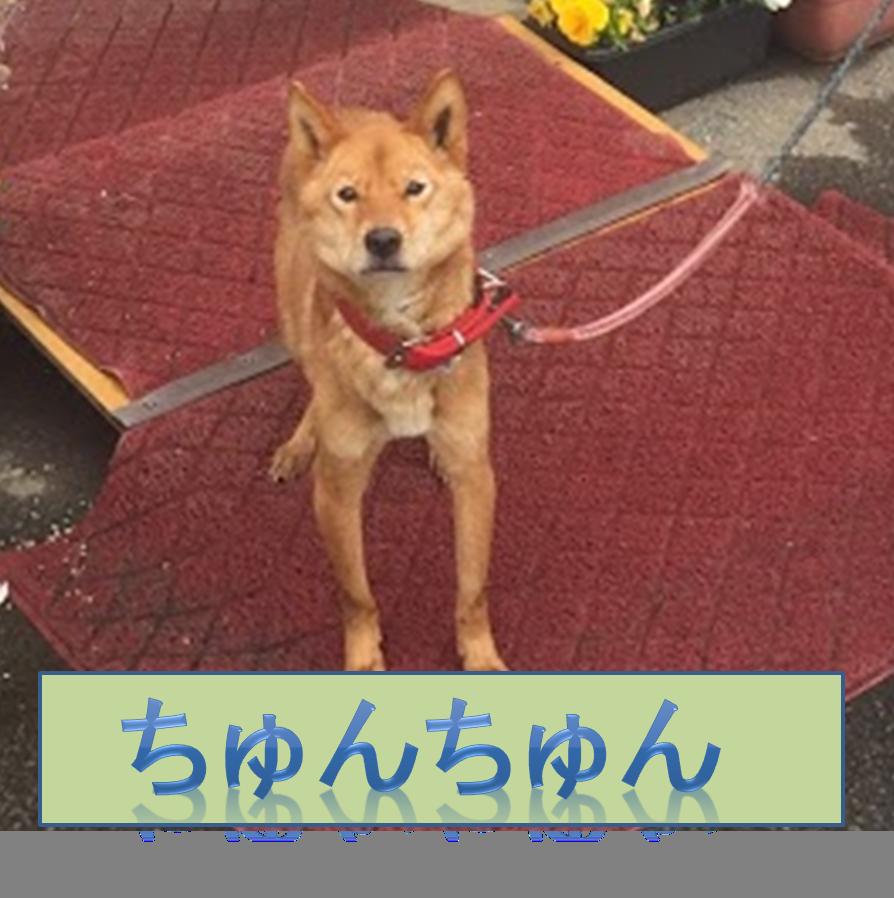 f:id:ryota0622:20170704193154p:plain