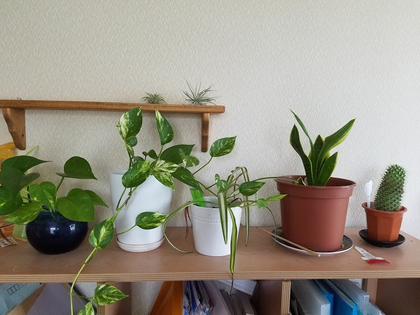 部屋に置いてある観葉植物
