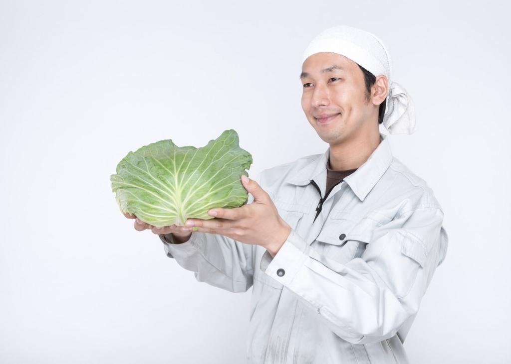 キャベツを持つ農家の男性