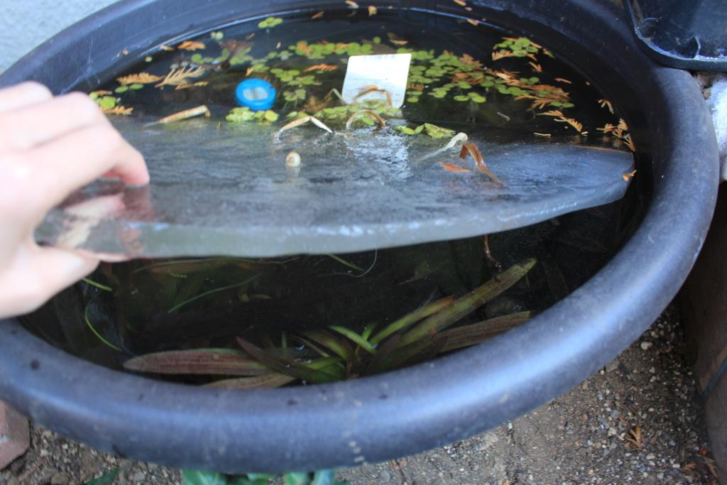 冬になると凍る外の水槽の水