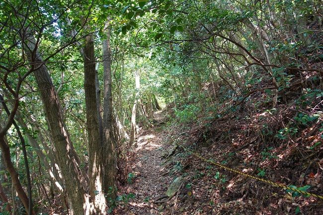 歩きやすいとは言い難い登山道