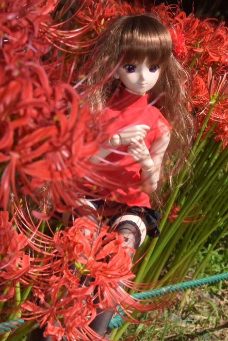 f:id:ryouse1366:20150923155519j:image