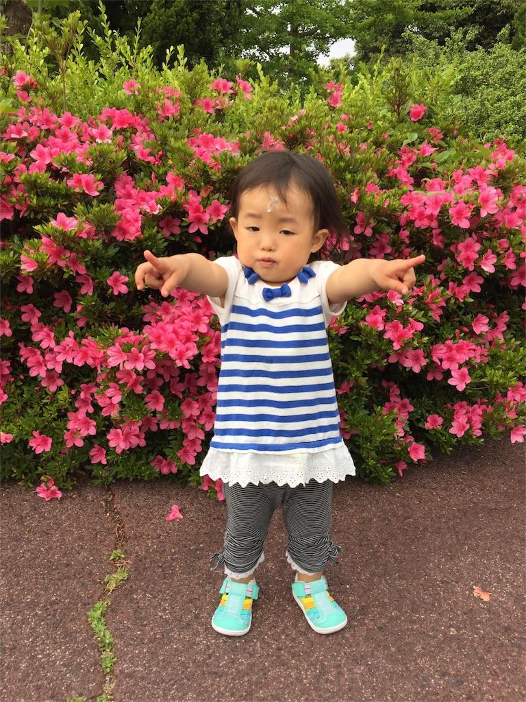 f:id:ryuhinamama08200501:20170525212622j:image