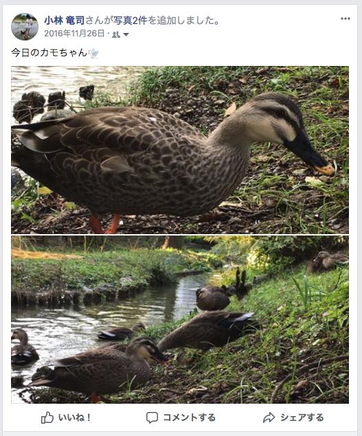 f:id:ryuji_026:20180127173623p:plain