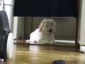 [犬][イケメンくん]