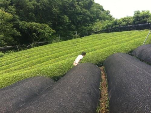 f:id:ryukoku-cha:20120704173920j:image