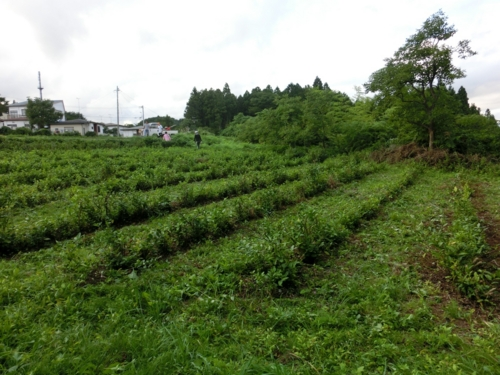 f:id:ryukoku-cha:20131004172612j:image