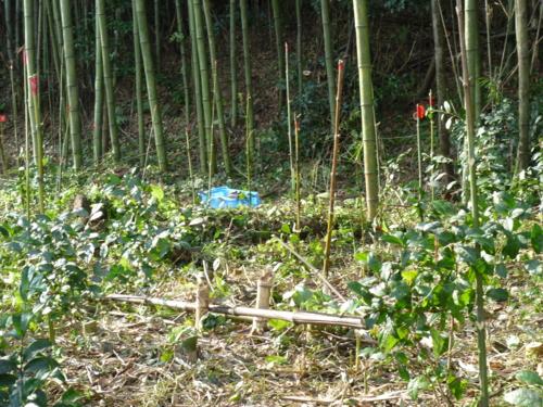 f:id:ryukoku-cha:20131006163124j:image