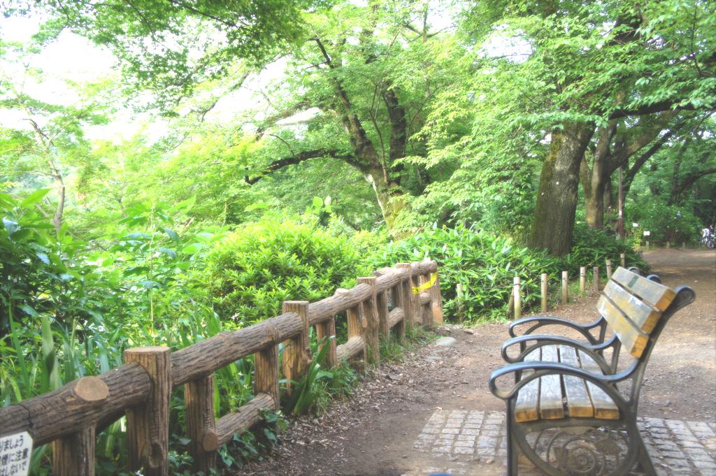 井の頭公園で読書する時に座ったベンチの写真