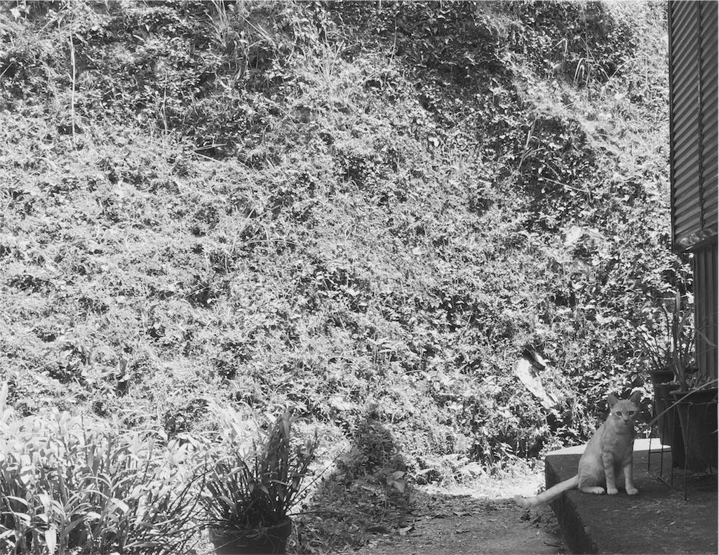 田舎にいた猫のモノクロ写真