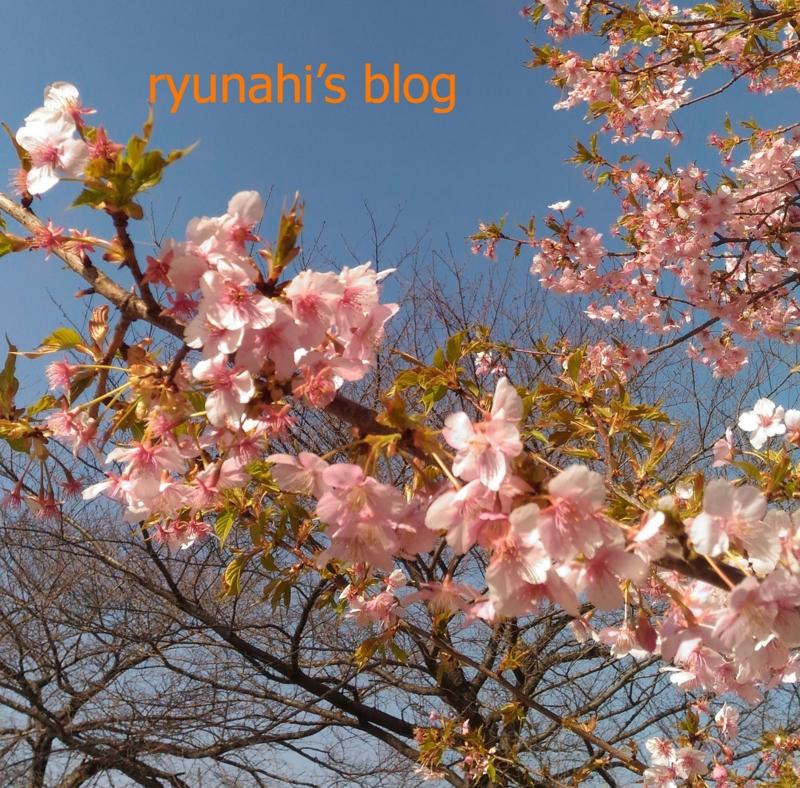 f:id:ryunahi:20170305140144j:plain