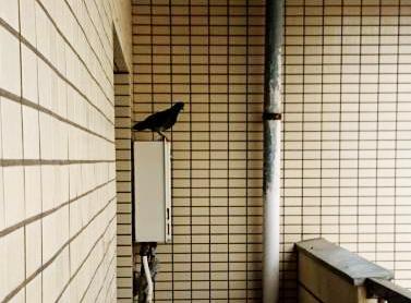 f:id:ryurou-shima1126:20180927235940j:plain