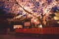 京都新聞写真コンテスト 古都の夜桜、イイネ