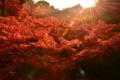 京都新聞写真コンテスト 秋の輝き