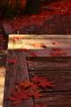 京都新聞写真コンテスト ある秋の午後