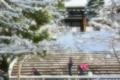 京都新聞写真コンテスト 空からのプレゼント