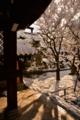京都新聞写真コンテスト 白い朝