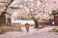 京都新聞写真コンテスト 春のお便り