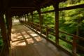 京都新聞写真コンテスト 新緑