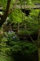 京都新聞写真コンテスト 崖に咲く梅雨華