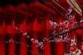 京都新聞写真コンテスト 侘び梅