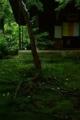 京都新聞写真コンテスト  沙羅双樹の花の色