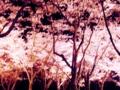 夜桜の下で、ひとり立つ。