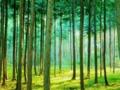 森の中を進む