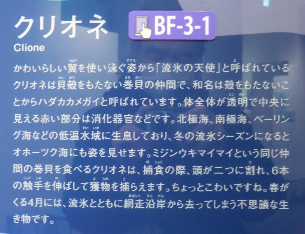 f:id:ryuuzanshi:20200229141330j:plain