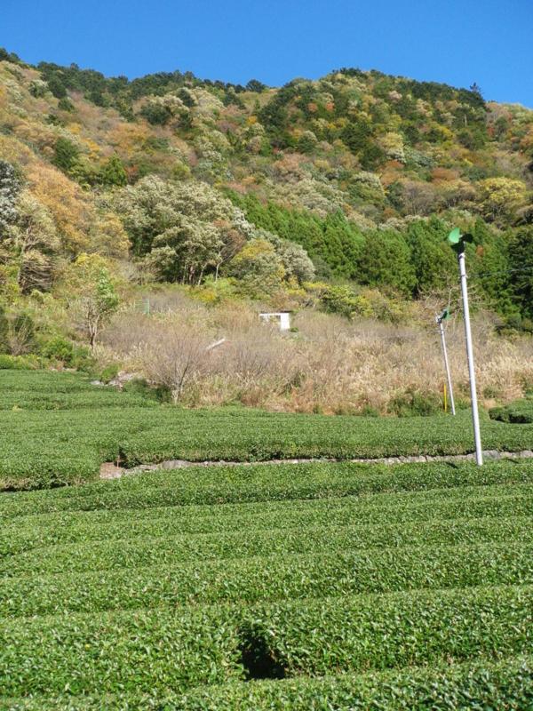 f:id:s-field0808:20111207135543j:image:w360
