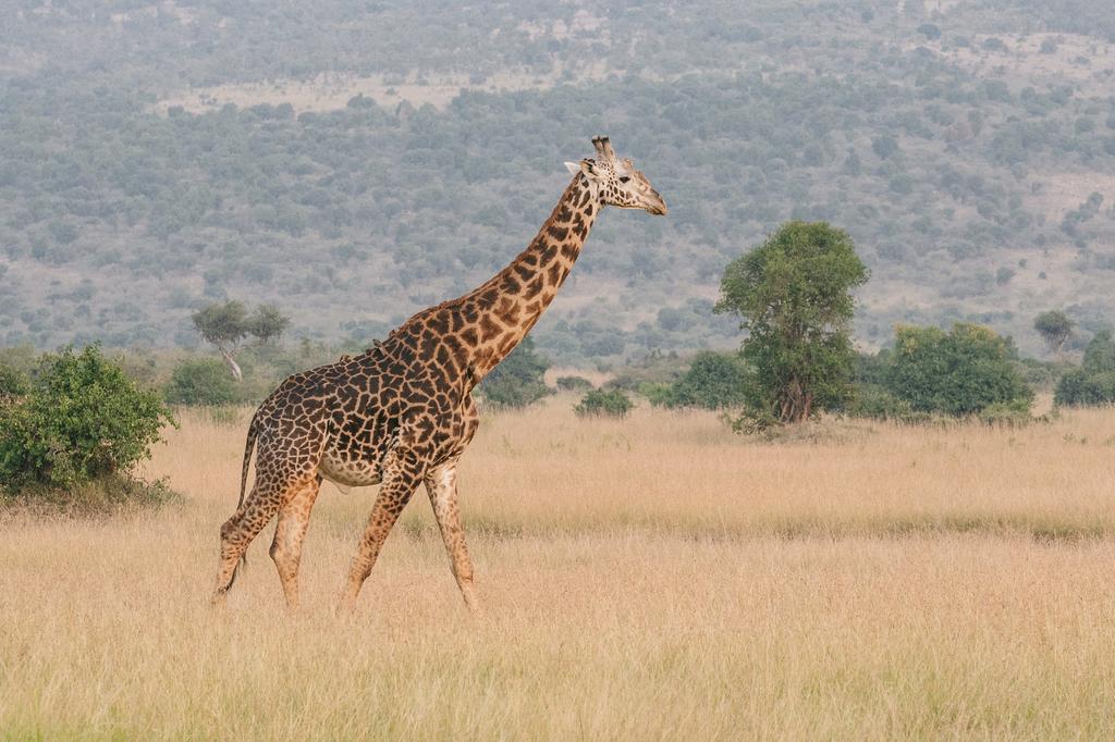 f:id:s-giraffeman:20180919173747j:plain