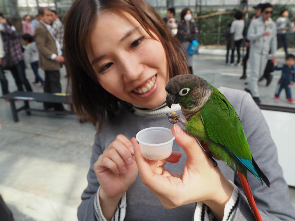 掛川花鳥園で鳥に餌を与える女性