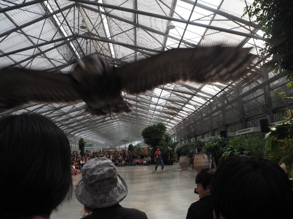 鳥が間近で飛んでくる掛川花鳥園のショー
