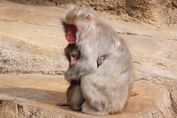 息子を抱っこする保育士さん