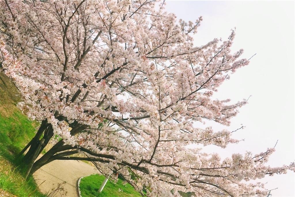 f:id:s-sugisaku:20210413101507j:image