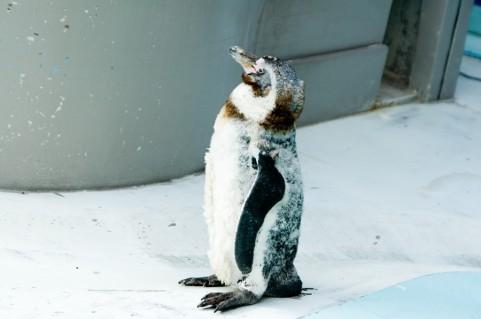 ペンギンの写真