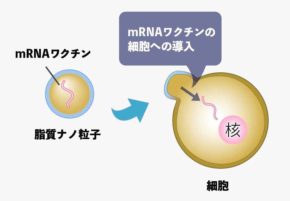 f:id:s-tamagawa:20210602153810p:plain