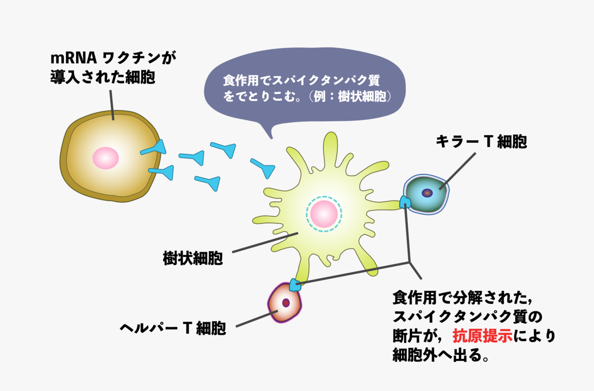 f:id:s-tamagawa:20210620222414p:plain