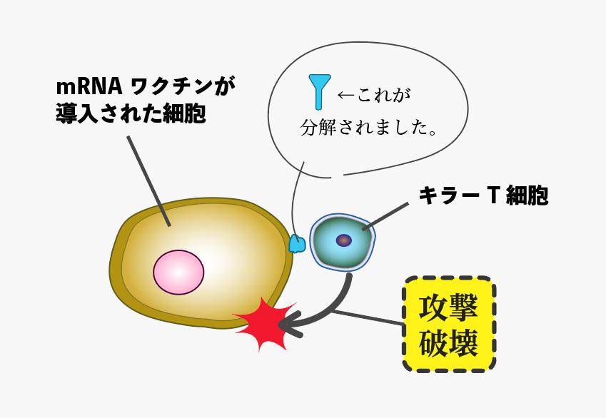 f:id:s-tamagawa:20210621145145p:plain
