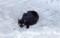 [121008][そば屋「黒潮」の黒猫]