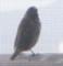 [130629][小鳥]