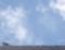 [130914][蝉にトンボ]