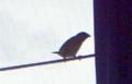 [160427][鳥]