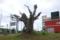 [160530][樹木]