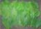 [160605][大葉収穫]